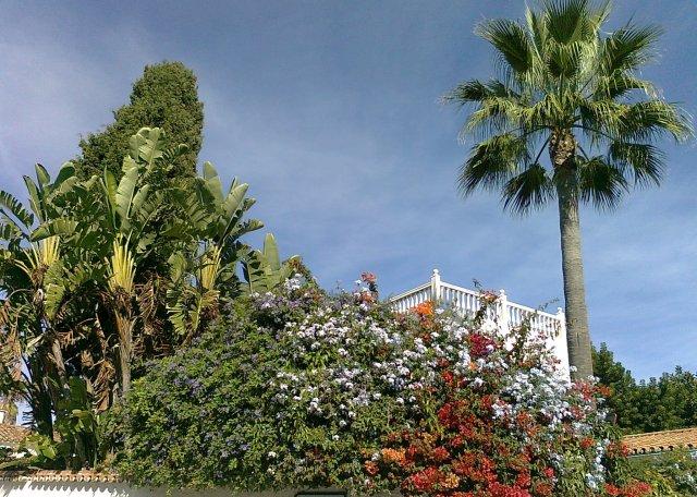 Palmträd, bananträd och bouganvilla
